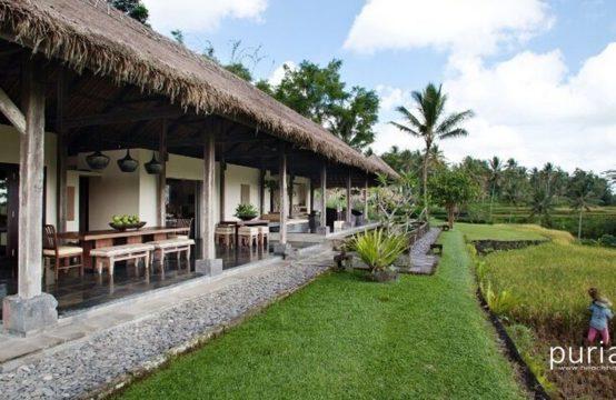 Villa Kelusa - Ricefield View